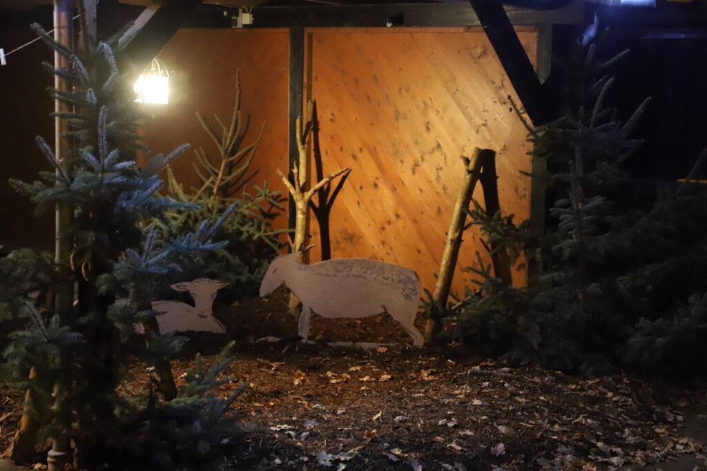 Schafe im Stall der Krippe in Schwülper